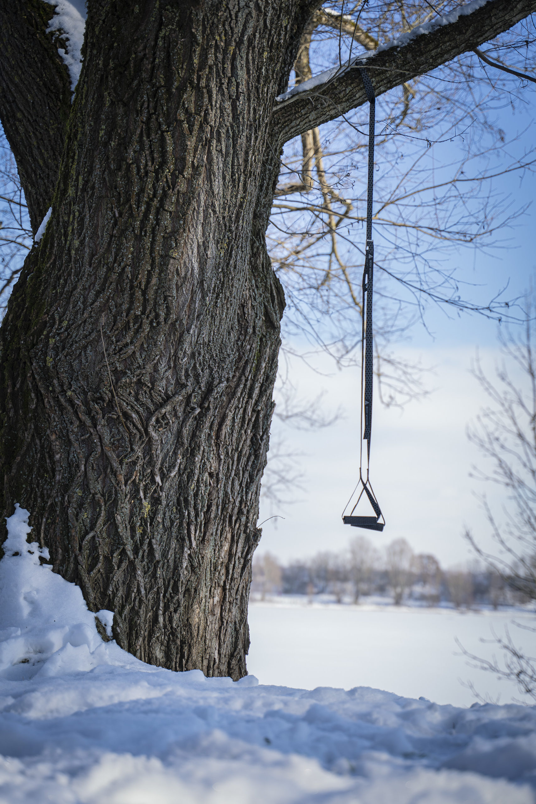 Sling Trainer an einem Baum